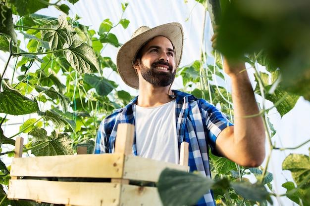 Junger landwirt, der frisches bio-gemüse anbaut und produziert
