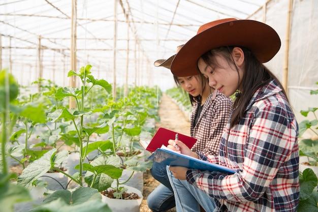 Junger landwirt, der neue art der melone wächst im treibhaus studiert
