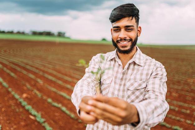 Junger landwirt mannhände, die eine grüne jungpflanze halten. symbol des frühlings- und ökologiekonzepts.