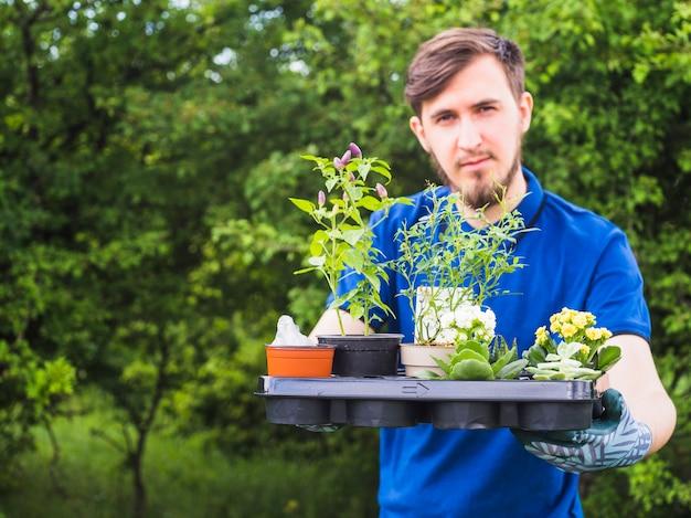 Junger männlicher gärtner, der topfpflanzenkiste hält
