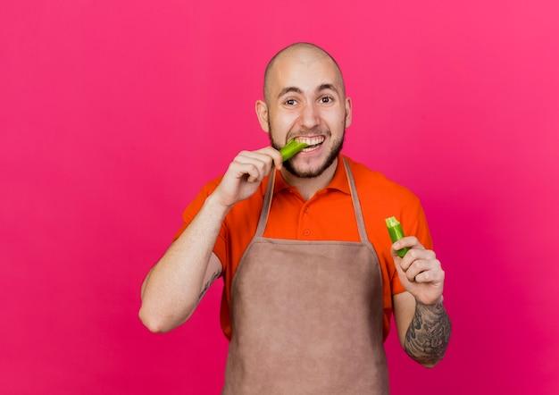 Junger männlicher gärtner hält und gibt vor, paprika zu beißen