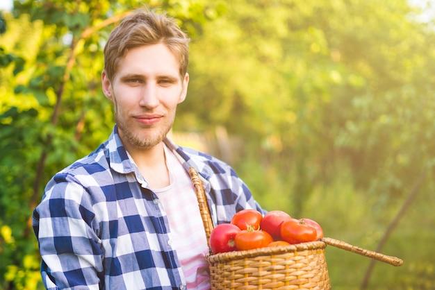 Junger männlicher landwirtgärtner sammeln tomate im korb im sonnigen bauernhof des sommers