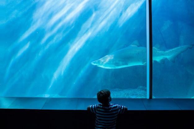 Junger mann, der einen haifisch in einem becken betrachtet