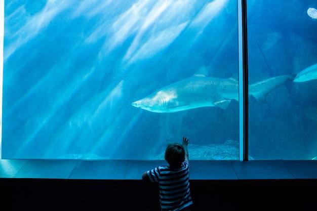 Junger mann, der einen haifisch mit seiner hand zeigt