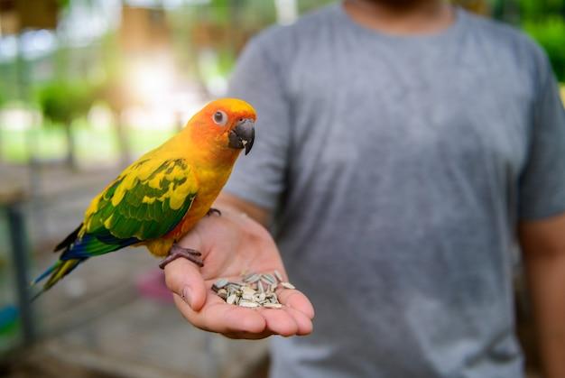 Junger mann, der einen papagei in seiner hand hält