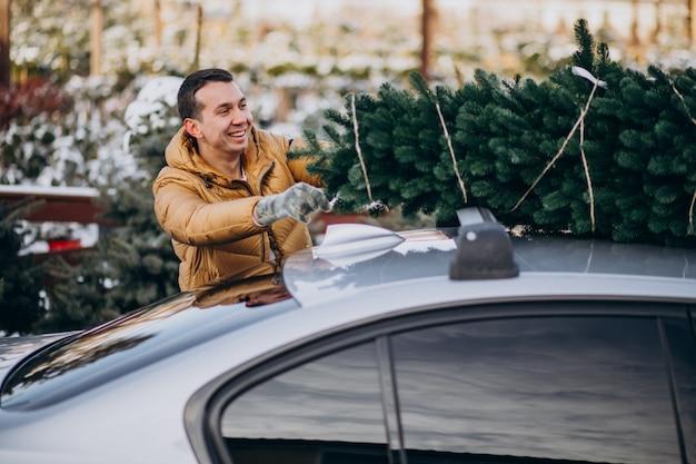 Junger mann, der weihnachtsbaum auf auto liefert