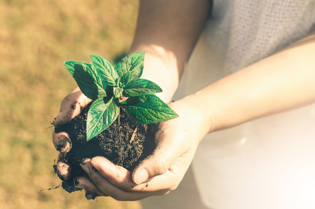 Junger pflanzenbaumspross in frauenhand.