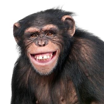 Junger schimpanse - simia höhlenbewohner auf einem weißen isoliert