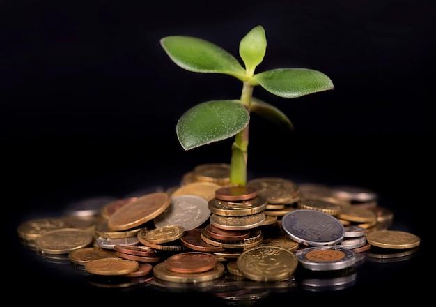 Junger spross aus einem stapel münzen. konzept für investitionen.