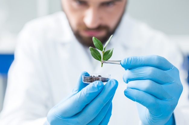 Junger spross. selektiver fokus einer jungen pflanze, die mit einer pinzette gehalten wird, während sie für die forschung im labor verwendet wird
