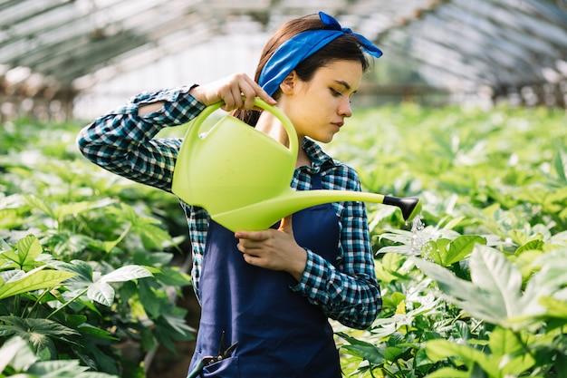 Junger weiblicher gärtner, der um anlagen im gewächshaus sich kümmert