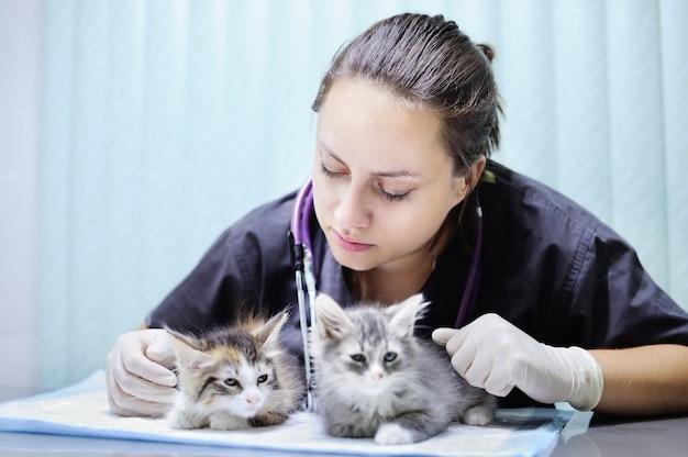 Junger weiblicher tierarzt, der auf nettem kätzchen schaut
