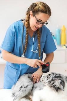 Junger weiblicher tierarzt, der haar mit slicker bürste in der klinik pflegt