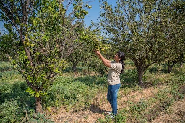 Junges bauernmädchen, das süße orangen von bäumen in händen hält und untersucht.