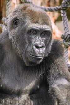 Junges gorilla-porträt