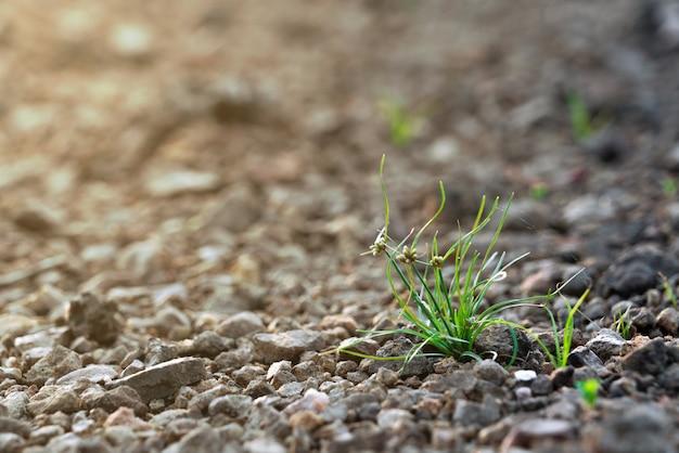Junges gras, das auf geröllfeld mit sonnenschein im vorfrühling aufwächst