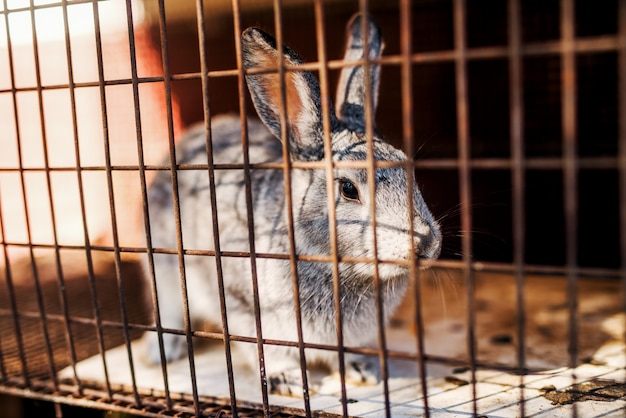 Junges graues kaninchen, das im alten käfig steht.