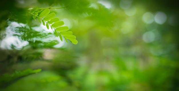 Junges grünes blatt auf unscharfer natur