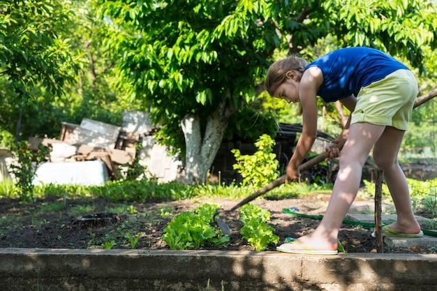 Junges mädchen, das das gemüsebeet jätet, das sich mit einer hacke unter den jungen pflanzen bückt