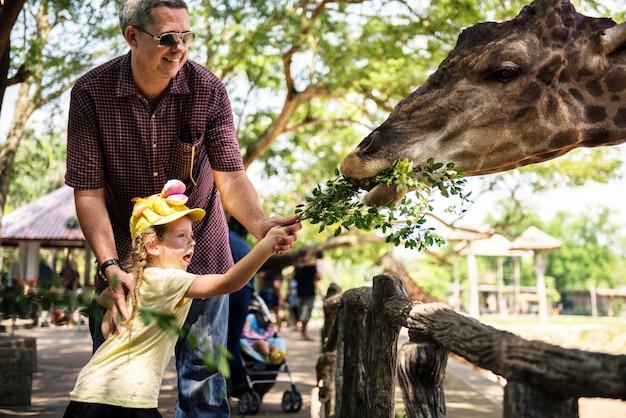Junges mädchen, welches die giraffe am zoo füttert