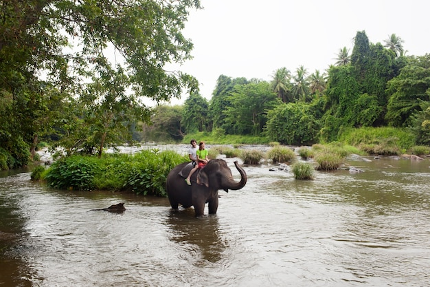Junges paar touristen auf einem elefanten in pinnewala, sri lanka zu reiten.