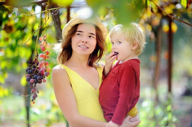 Junges schönes mädchen und kleines kind, die ausgereifte traube am sonnigen tag in italien auswählt. glücklicher weiblicher landwirt und ihr kleiner helfer, die im obstgarten arbeitet