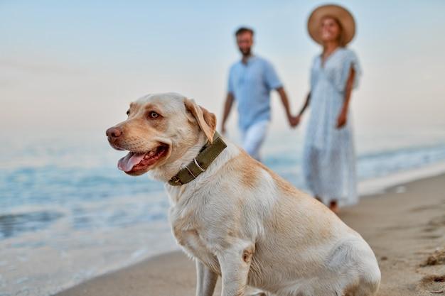 Junges verliebtes paar, das entlang des strandes händchen haltend mit ihrem labradorhund geht und spaß im urlaub hat.