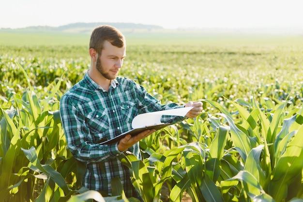 Junglandwirt inspiziert ein feld mit grünem mais. landwirtschaftliche industrie.