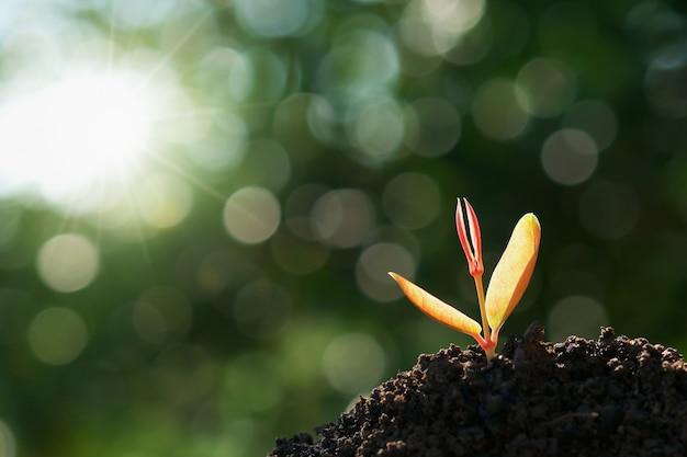 Jungpflanze, die auf boden mit grüner natur wächst