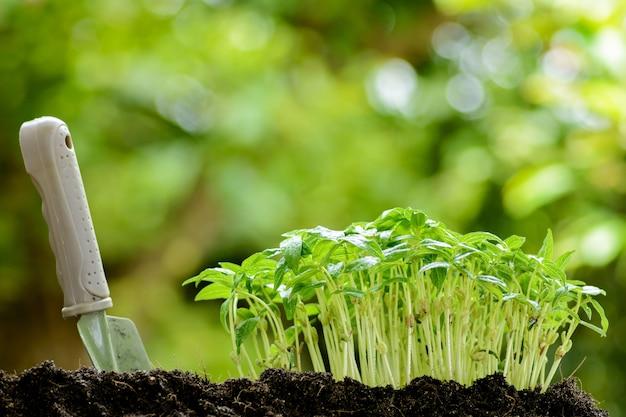 Jungpflanze, die auf boden wächst