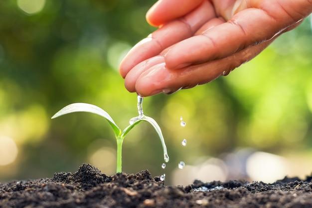 Jungpflanze, die im garten wächst und von hand wässert