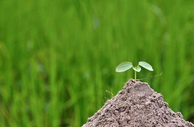 Jungpflanze, die im naturgrünkonzept wächst