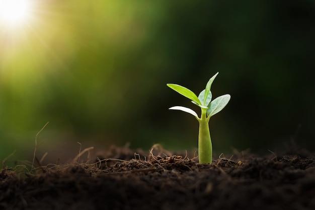 Jungpflanze, die mit sonnenschein in der natur wächst