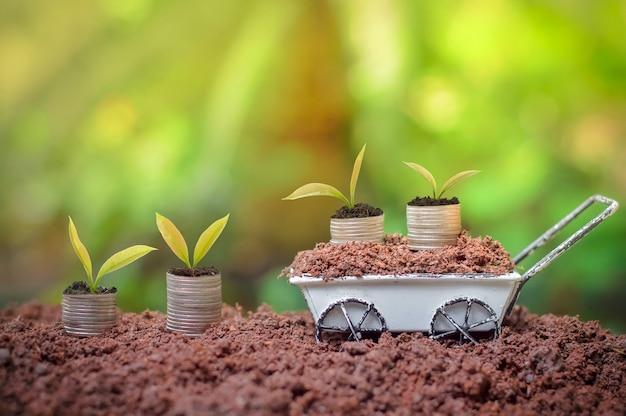 Jungpflanzen wächst auf stapel münzen für unternehmensinvestition oder einsparungskonzept auf