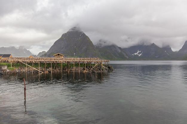 Kabeljaufische, die auf traditionellen holzgestellen in den lofoten-inseln, norwegen, europa trocknen