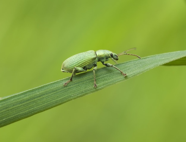 Käfer auf einem blatt