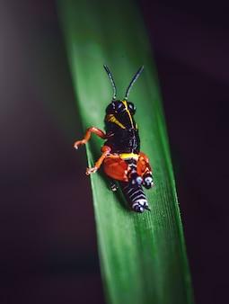 Käfer auf einer frischen grünen pflanze mit einer verschwommenen wand