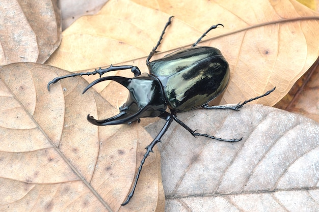 Käfer im trockenen blatt