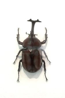 Käfer mit einem hammer auf die nase