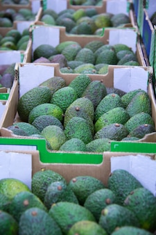 Kästen mit avocado