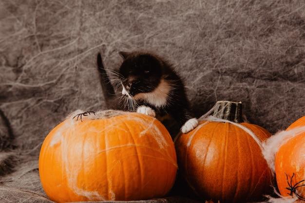 Kätzchen an den halloween-dekorationen
