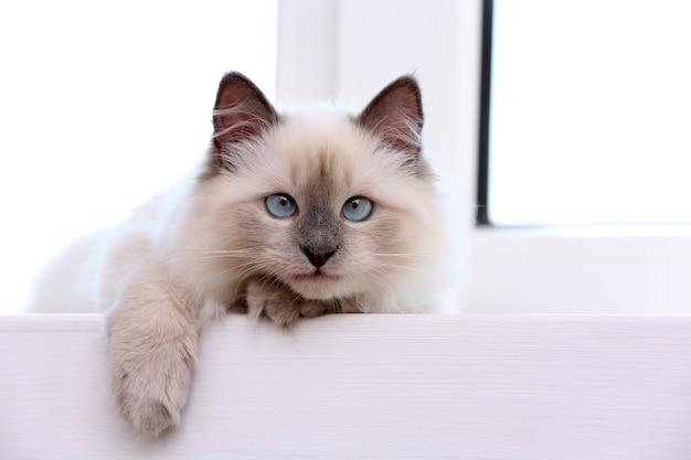 Kätzchen auf der fensterbank liegend, nahaufnahme Premium Fotos