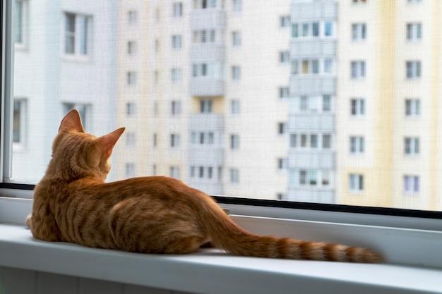 Kätzchen auf der fensterbank mit schützendem mücken- und katzenschutznetz