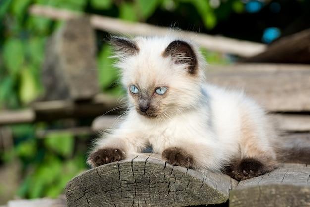 Kätzchen auf der tafel