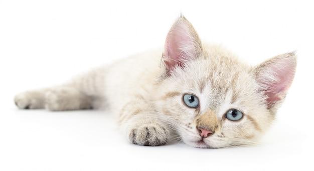 Kätzchen auf einem weißen