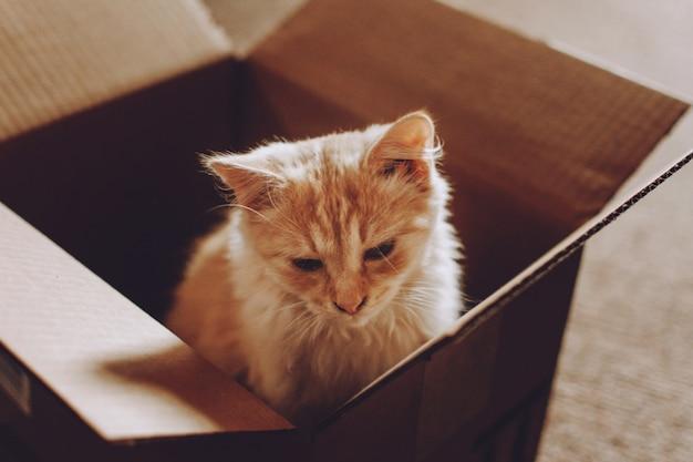 Kätzchen aus dem tierheim adoptieren. katzenrettung
