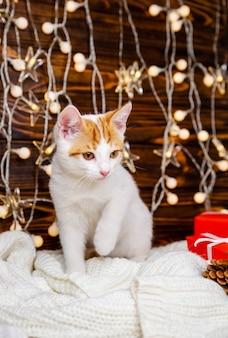 Kätzchen, das am weihnachtsbaum mit lichtern sitzt. nettes kätzchen, das sich entspannt