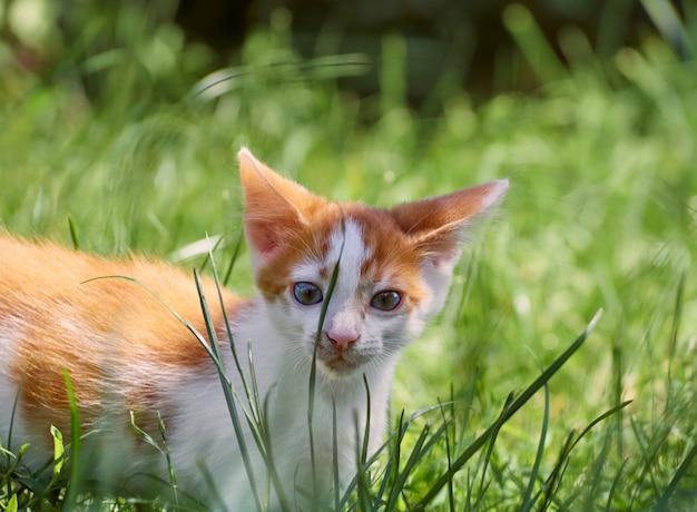 Kätzchen, das im gras spielt