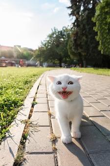 Kätzchen, das im park lächelt