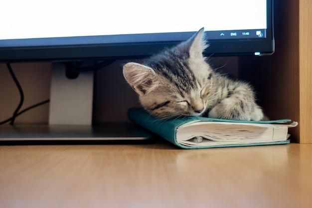 Kätzchen, das unter computerüberwachungsgerät schläft.